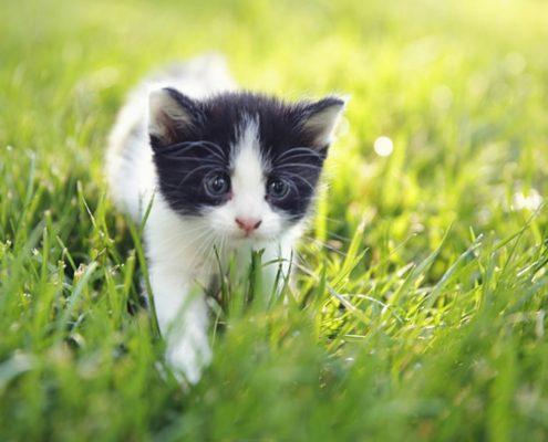 Pickles the Kitten